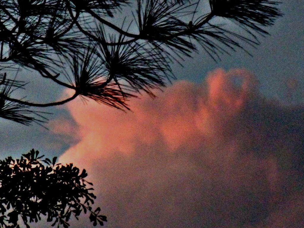 sky pine