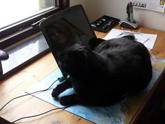 Murre the the cat (Ken-Zan) Tags: black cat laptop murre kenzan catnipaddicts