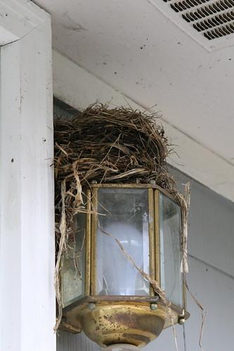the nest!!