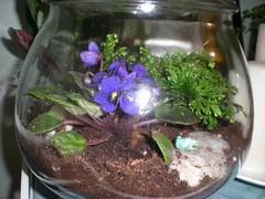More terrariums... (ninaqinoh) Tags: green glass vintage moss violet pebbles thrift vase recycle terrarium repurpose