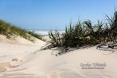 Padre Island Dunes