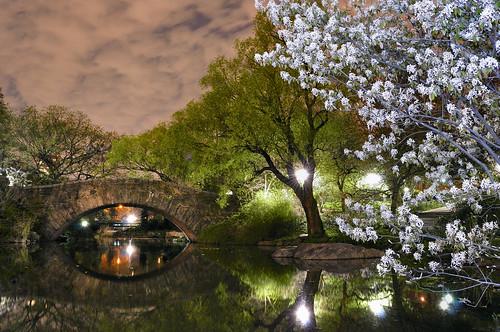 nikon d5000 pictures. Nikon D5000 test Central Park