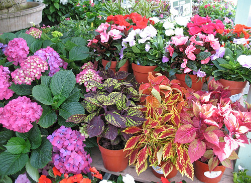 color plants for shade gardens, hydrangea new guinea impatiens, coleus
