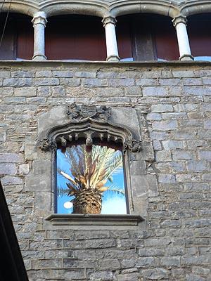 reflet palmier.jpg