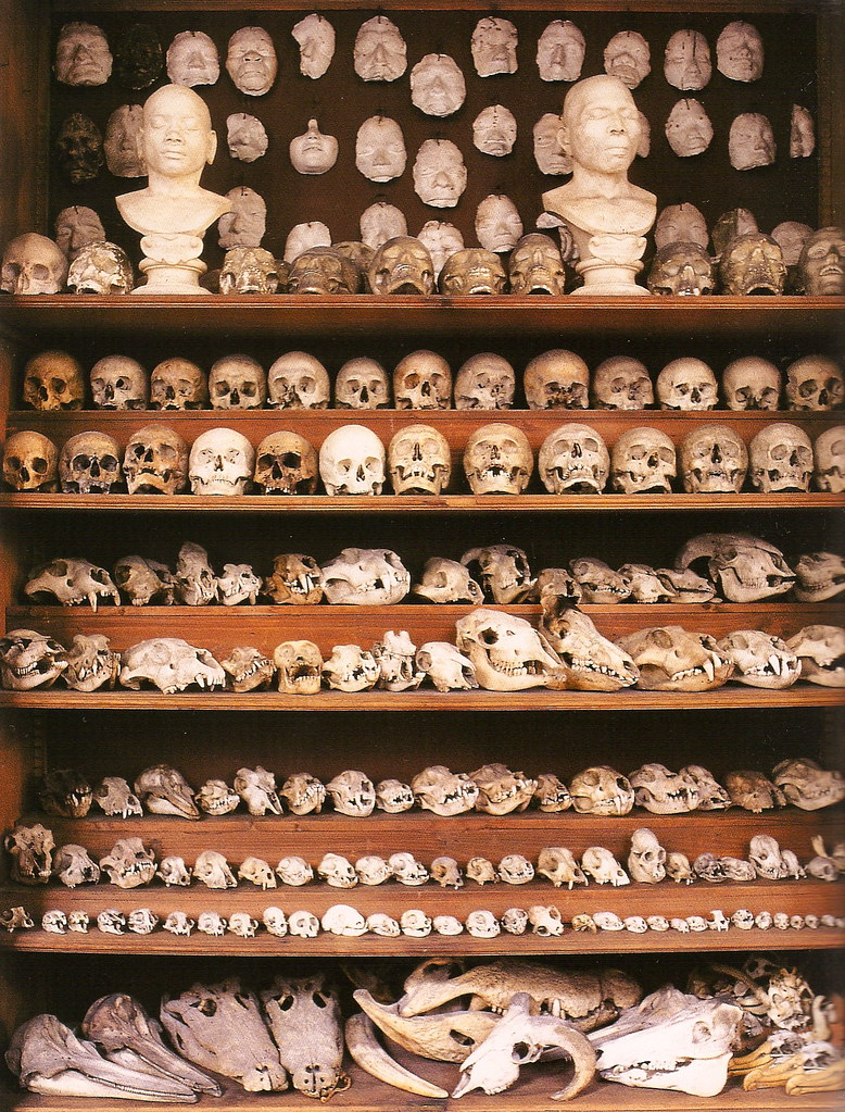 Skulls of humans and various animals from the Galerie Huguier. École des Beaux-Arts, Paris, 2008.