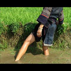 A beauty in the rice (NaPix -- (Time out)) Tags: portrait food woman black green water work hope bravo asia southeastasia rice paddy farmers farming working vietnam explore fields journalism sapa hmong paddies indigoblue explored muonghoavalley napix weareplantingthericenow manbuffaloandearthareone abeautyintherice