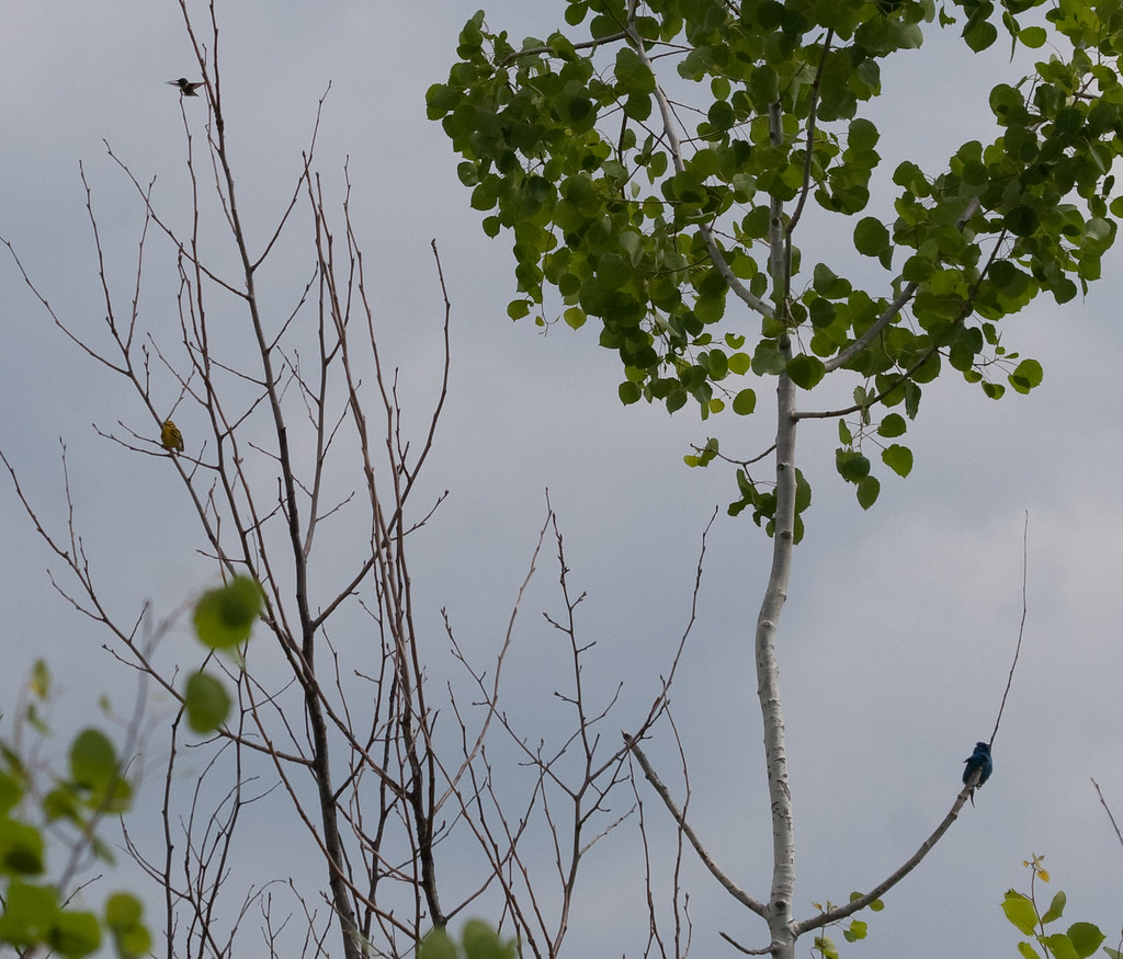Treeful