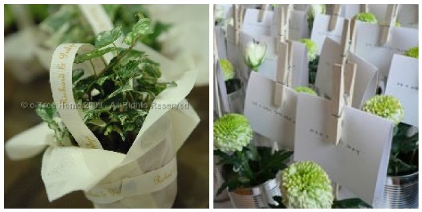 e-tree potted favours
