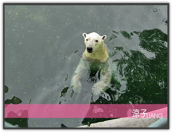 愛寶樂園(動物篇)01
