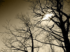 TrEes (SwEeTcHy) Tags: sun tree sol sepia arbol