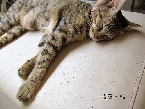 極簡貓27