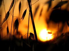le luci di casa (nessuno o tutti o tutto o niente) Tags: casa tramonto country campagna cielo sole calore attimi