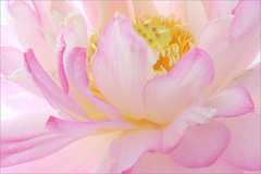 Nature (Bahman Farzad) Tags: flower nature yoga peace relaxing peaceful meditation therapy