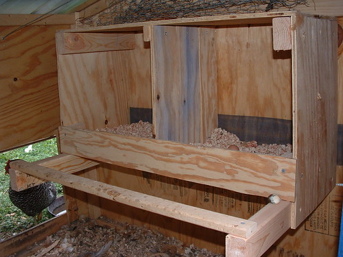 The nest boxes from the inside.
