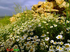 Kurdistan  mountain, nature landscape (Kurdistan Photo ) Tags: love photography photo photojournalism kurdistan barzani kurd naturesfinest kurden photo kuristani kurdistan4all kurdistan4ever kurdphotography  kurdistan4all kurdene kurdistan2008 sefti kurdistan2009