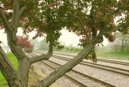 tracks and blossoms {2}