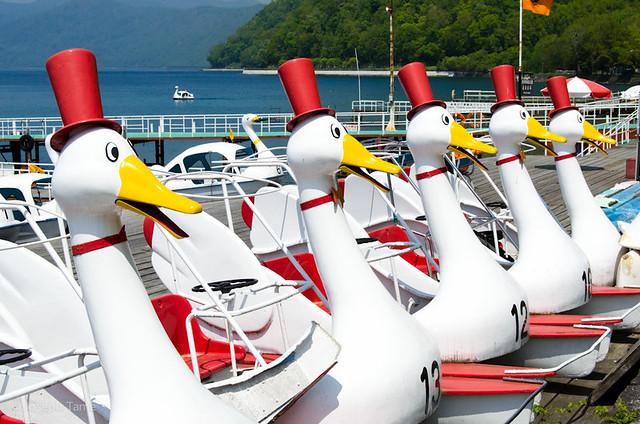 Hokkaido-duck-boat_6292