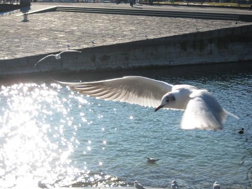 Möwen im Konstanzer Hafen