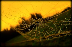 im Spinnenmonat ... - spiders month (NPPhotographie) Tags: autumn art nature water fence germany spider herbst creative september rime zaun oberberg spinnennetz abigfave platinumphoto