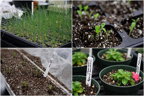 Four shots of seedlings