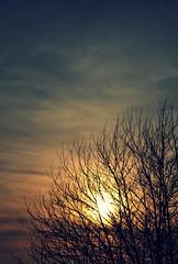 Suave luz / Soft light (Julia Antonio-A. de Amlie ) Tags: sunset sky espaa orange sun tree sol azul clouds landscape atardecer spain nikon julia paisaje galicia galiza cielo amelie nubes rbol kdd naranja vigo amlie solpor d90 nikond90 aprendizdeamelie kddsvigo1422009