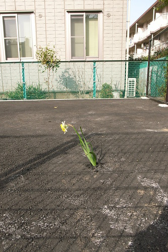 An asphalt flower 2