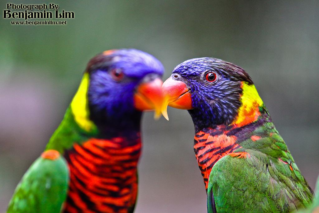 birdpark1_24