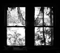 Windows, Vacant House, Spring, Texas 0329091250BW (Patrick Feller) Tags: black white blackandwhite blackwhite bw window windowsthroughwindows house spring texas harris county decay abandoned abandonment vacant rural finestra fenetre fenster ventana united states north america