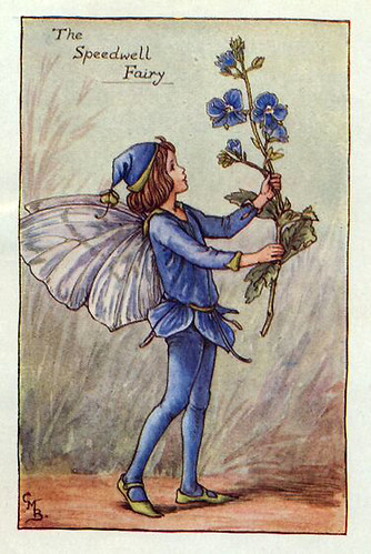007-speedwell_flower_fairy
