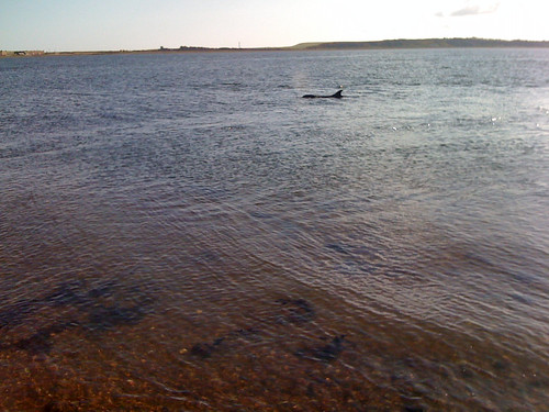 A day dolphin spotting at Fortrose