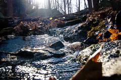 _MG_4814-23 (k.a. gilbert) Tags: sun reflection nature water leaves spring woods stream hiking hike flare splash 116 lightroom uwa tokina1116mmf28
