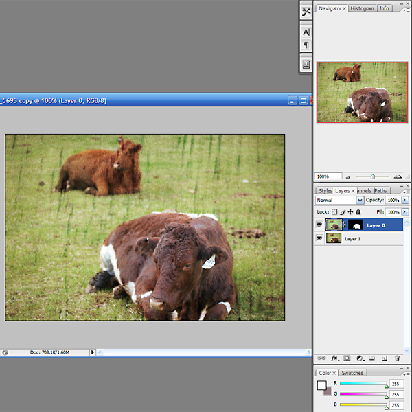 cows_texture_directions