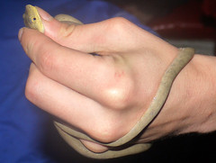 Serpent Liane (Greyshift11) Tags: france lumix dom pluie cayenne panasonic g1 mm serpent marais plage 45mm forêt dmc pirogue kaw 1445 amazonie liane guyane tropicale 14mm dmcg1