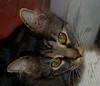 Stubby Cat Stink Eye