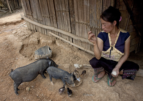 Feeding pigs and birds - Laos / Eric Lafforgue