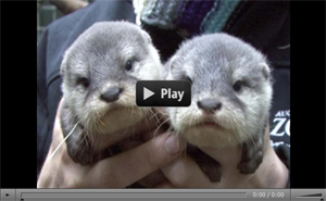 Fuelling my otter obsession
