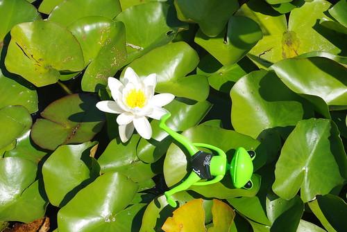 [Wonder Frog Wanda] Grenouille voit la vie en vert 3795941842_6f67918f63