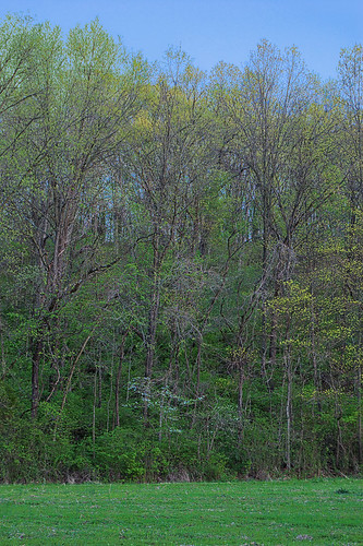 Forest 44 Conservation Area, near Valley Park, Missouri, USA - hillside at dusk
