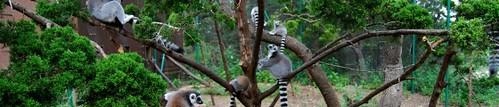 Uganda Primates Tracking (Trekking) Information