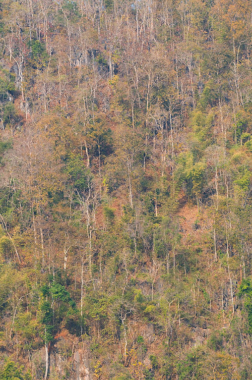 The changing colours of leaves along the road to Huay Phueng, Mae Hong Son