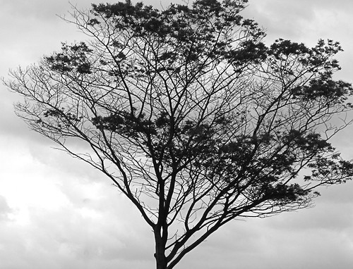 Tree against a cloudy sky
