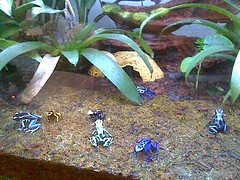 Dendrobates 017 by media@klownacide.com, on Flickr