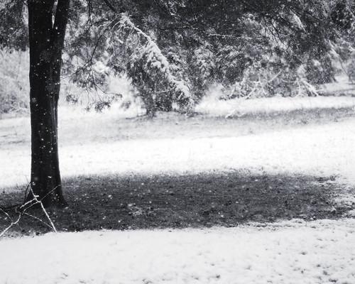 v snow 029 bw