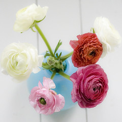 Ranunculus (Craft & Creativity) Tags: pink flowers blue red white flower ranunculus vase bouquet