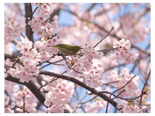 Cherry & Bird 090319 #02