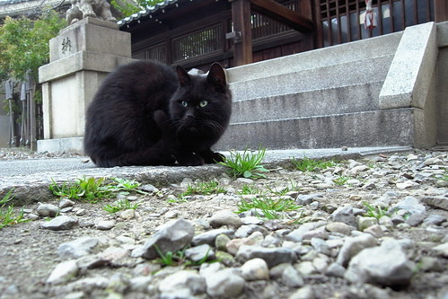Today's Cat@20090319