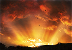 Soul Birds! (adrians_art) Tags: sunset red sky cloud birds silhouette yellow evening gulls rays sunrays beams orage sunbeams seaguls