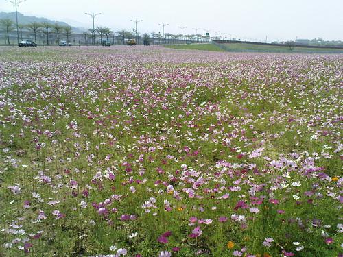 苗栗市路旁的花