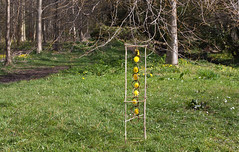 Dandelion Tower View (escher is still alive) Tags: sculpture flower tower home grass reeds spring box fresh lancashire dandelion growth hazel lancaster april thorn 2009 ephemeral landart naturalart enviro sculpure enviroart andygoldsworthyhomage richardshilling