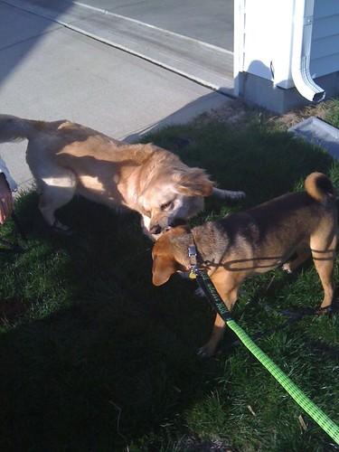 Laney and Gyra